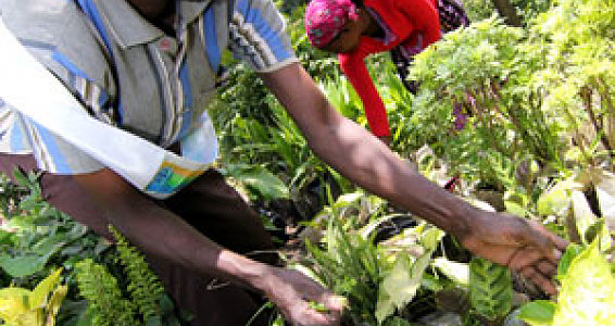 Seeds of hope take root, prosper in Ethiopia