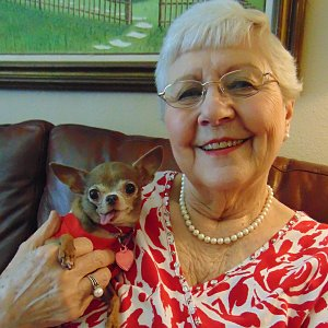 Barbara Corley of Calder Woods with Gracie, her 8-year-old teacup chihuahua.